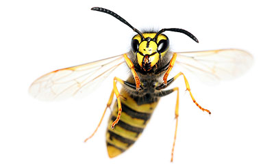Image Result For In Wall Pest Control System